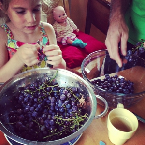 Our grapes, hand picked by my favorite little person –